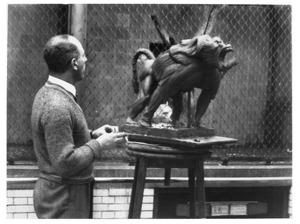 Jaap Kaas werkend aan zijn 'Dreigende mantelbaviaan'  in het apenhuis van Artis, ca. 1938.