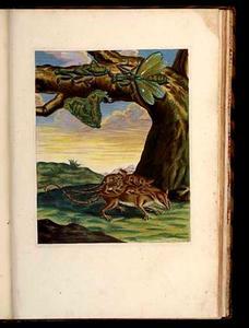 Aeneasrat (buidelrat) met jongen en zuid-amerikaanse bidsprinkhaan