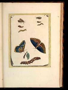 Trompe l' oeil blad met voorstelling van poppen, rupsen en vlinders