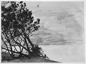Ontwortelde bomen