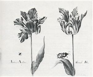 Twee tulpen (Amberes Acosta en General Bol), een lieveheersbeestje en een beervlinder