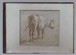 Koeienstudie