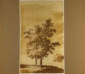 Twee bomen op een heuvel