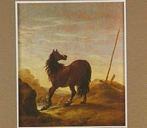 Bruin paard in een duinlandschap