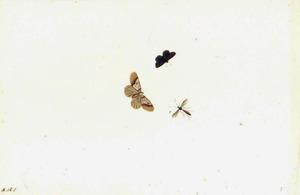 Twee vlinders en een zweefvlieg (?)