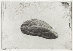 Mosselschelp