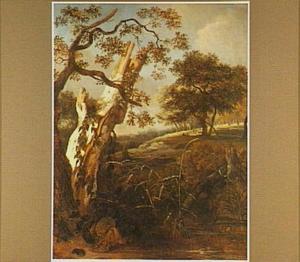 De stronk van een zilverberk aan de waterkant in een boomrijk glooiend landschap