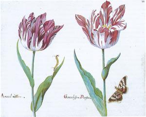Twee tulpen (Amaral úr[?]flora en Generalissimo Dacosta), een vlinder en een rups