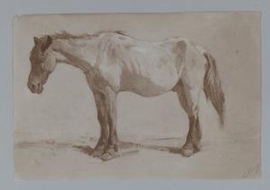 Studie van een paard