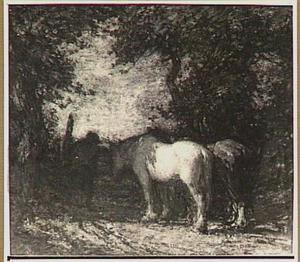 Paarden bij een hek