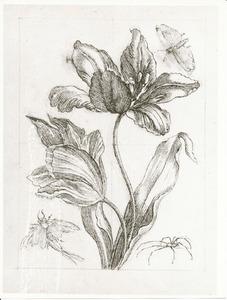 Tulp, vlinder, hooiwagen en hemerobius