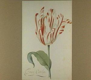 Tulp (Joury Catelijn)