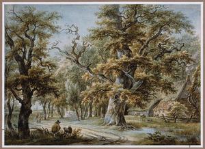 Boslandschap bij Midlaren in Drenthe