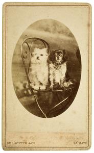 De hondjes van het echtpaar Cuissinier-de Lavieter