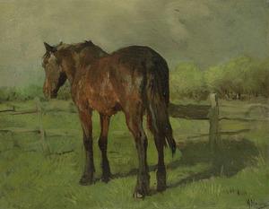 Paard bij een hek