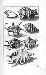 Harpagoschelp (4x), roze schorpioenhoren (2x) en Seba's schorpioenhoren