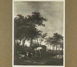 Landschap met koeien in een weide bij een waterplas