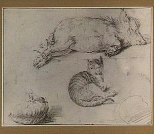 Studies van een kat en een zwijn