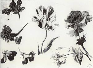 Studie van zeven bloemen