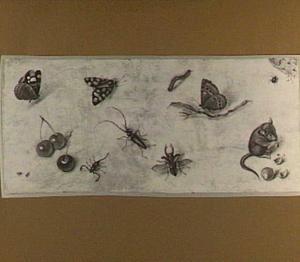 Vlinders, andere insekten, vruchten en een muis