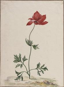 Een anemoon