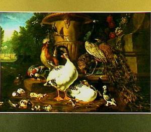 Hoenders, een pauw, ganzen en eenden in een park