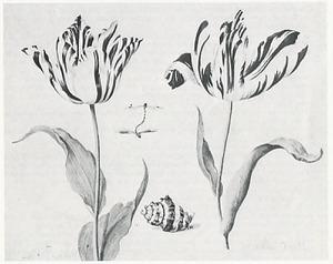 Twee tulpen (o.a. La belle Gabrielle), stel parende waterjuffers en een schelp