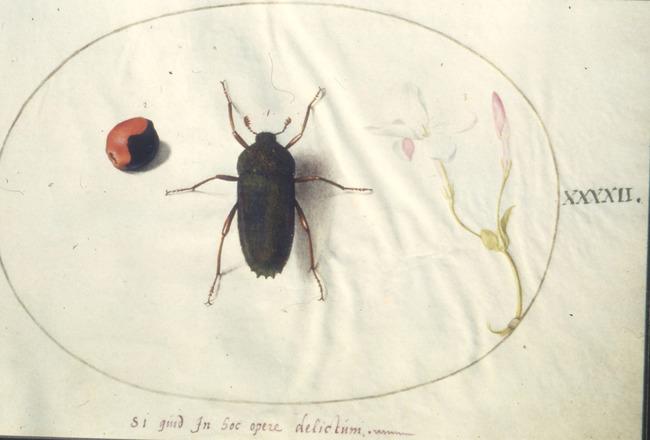 laid bug datant rencontres pendant le divorce à New York