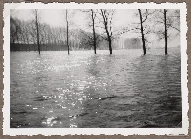 Vermoedelijk de bomenrij langs het Oostveensepad richting het Kla...