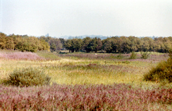 onbekend, polder