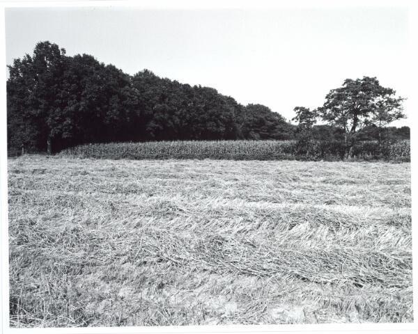 015447 - Landschap. Fase I de Blaak