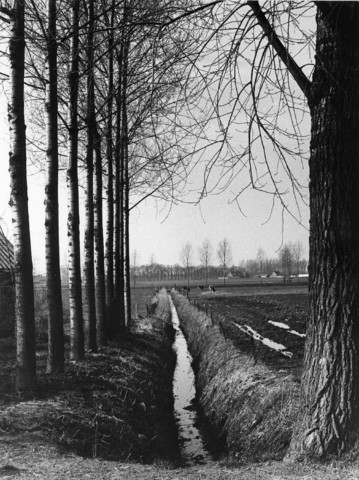 1238_F0388 - Landschap met bomen, koeien en een sloot. Boerderij op de achtergrond