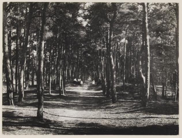 """073543 - Bosgezicht van bospad, vermoedelijk langs de Gemullehoekenweg nabij de """"Rozep""""."""