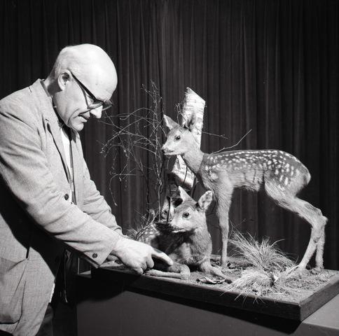 653843 - W. van Boextel, conservator van het Natuurhistorisch Museum aan de Paleisring.