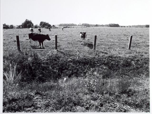 015329 - Landschap. Omgeving van de voormalige spoorlijn Tilburg - Turnhout, in de volksmond ´Bels lijntje´ genoemd