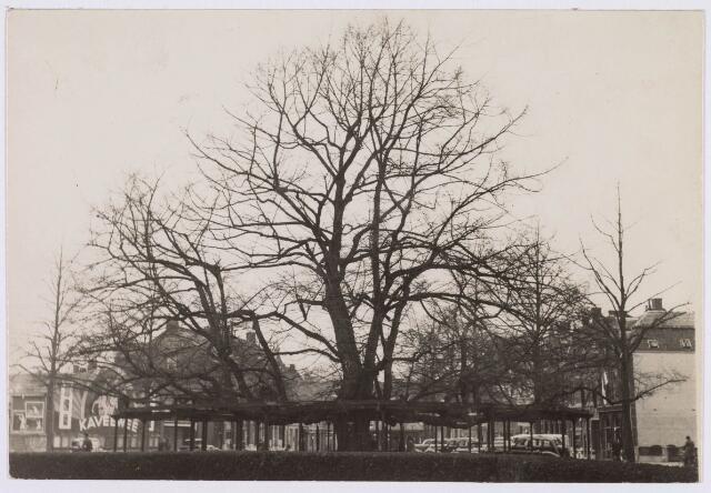 021383 - De lindeboom op de Heuvel in 1935 gezien in noordelijke richting