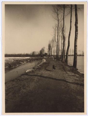023987 - Koningshoeven anno 1922. Hond lopend over het pad. Het huisje op de achtergond is van de ijsclub.