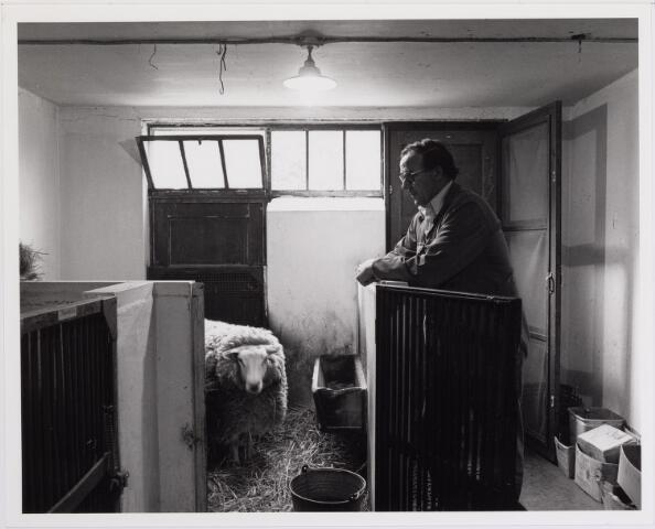 041850 - Elisabethziekenhuis. Gezondheidszorg. Ziekenhuizen. Schaap in het dierenhuis in het St. Elisabethziekenhuis. Deze schapen waren nodig om 1 maal per week bloed te geven, dat werd gebruikt voor het maken van kweekplaten voor het bacteriologisch lab.