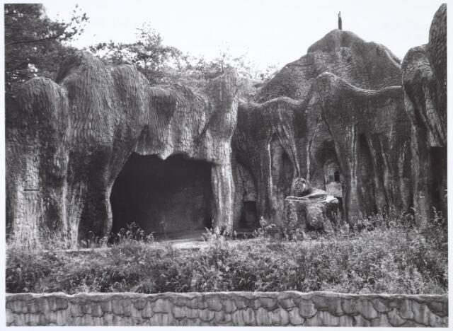 016277 - Dierentuin. Leeuw in het dierenpark aan de Bredaseweg. Oorspronkelijk heette het Burgers Dierenpark en werd later overgenomen door de firma Van Dijk. In augustus 1973 werden de poorten gesloten