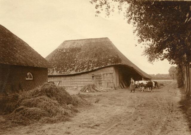 600859 - Jana van Loon met drie koeien bij het karschop van de Kasteelshoef.  Kasteel Loon op Zand. Families Verheyen, Kolfschoten en Van Stratum