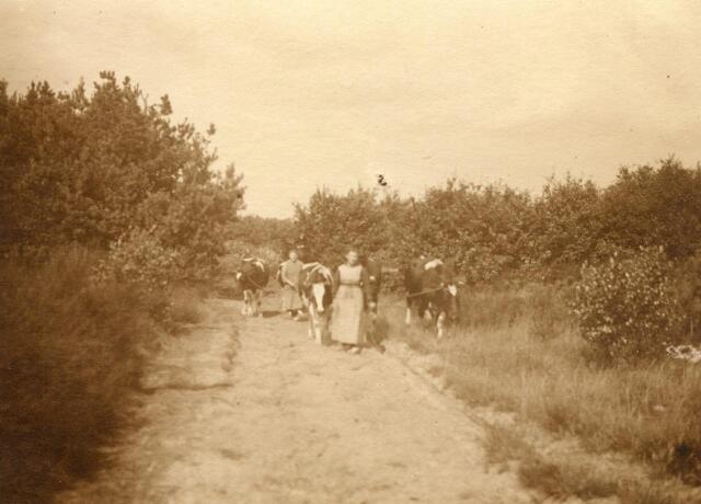 600827 - Jans en Cor (Kee) van Loon brengen koeien huiswaarts. De ruiter op de achtergrond is Jos van Loon.  Families Verheyen, Kolfschoten en Van Stratum