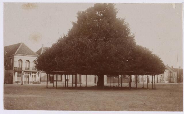 021365 - De lindeboom anno 1895. Links op de achtergrond De Looiersbeurs