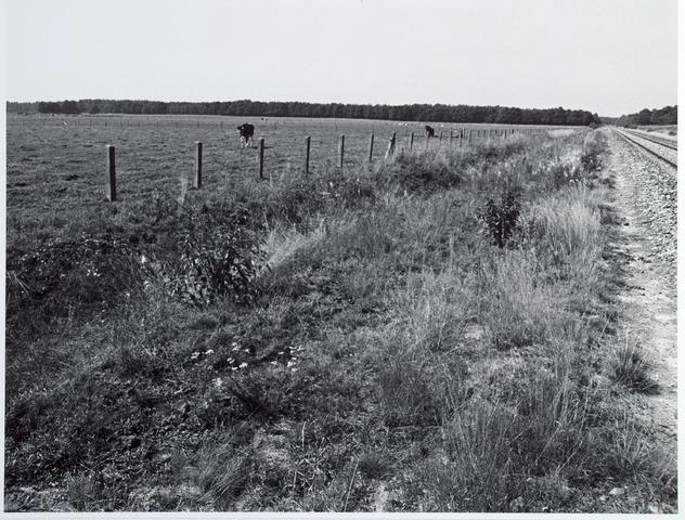 015328 - Landschap. Omgeving van de voormalige spoorlijn Tilburg - Turnhout, in de volksmond ´Bels lijntje´ genoemd