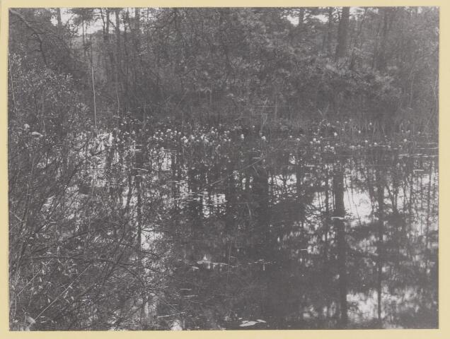 075391 - Serie ansichten over de Oisterwijkse Vennen.  Ven: Choorven
