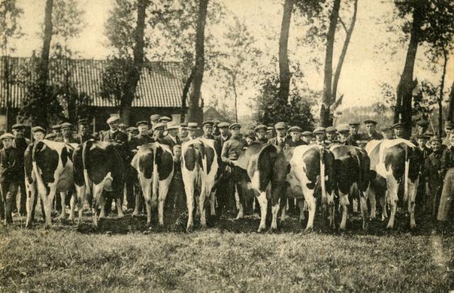 071591 - Fok- en controlevereniging Udenhout. Bekroonde fokdieren.