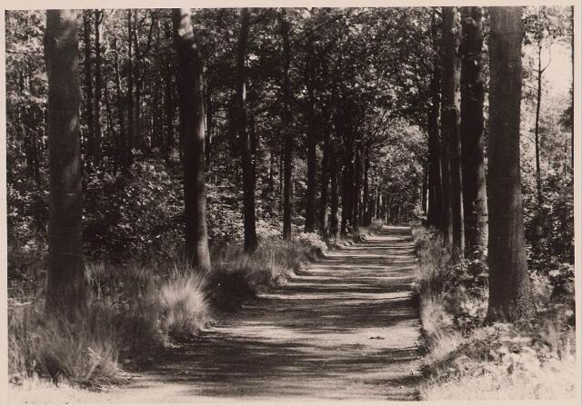 027874 - Oude Warande, wandelweg.