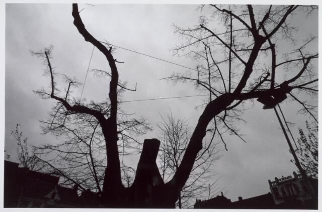 021415 - De lindeboom op de Heuvel werd in zijn nadagen middels tuidraden bijeen gehouden