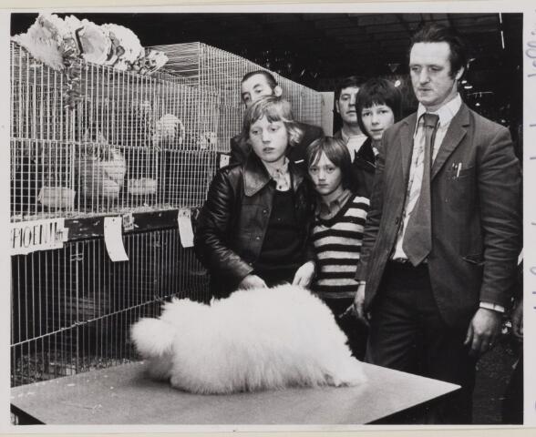 085174 - Dongen. Kleindieren tentoonstelling. Op de voorgrond de algemeen kampioen een angora konijn.