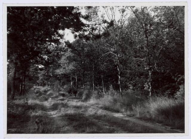 018946 - Bospaadje nabij de Gilzerbaan