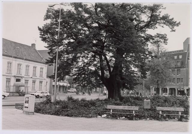 021404 - Lindeboom op de Heuvel in zijn nadagen